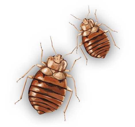 Think Your Home Or Business Is Infested With Bed Bugs?